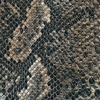 Snake - Aythana N