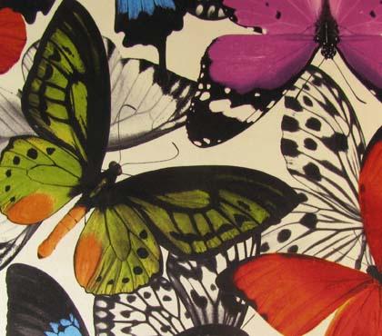 Aurelia Butterfly